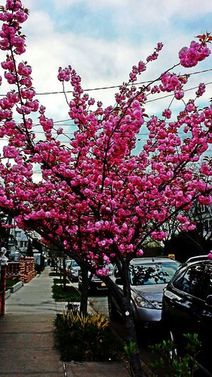 Flawers Pink Flow  Morningshots