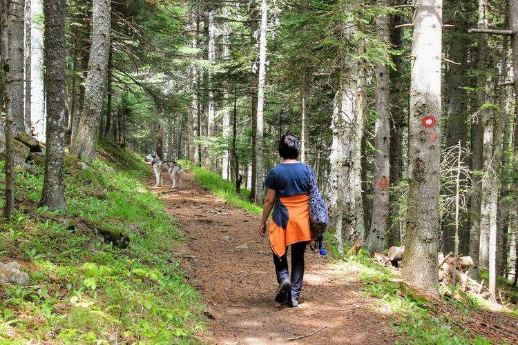 Rear view of man walking on footpath amidst trees in forest