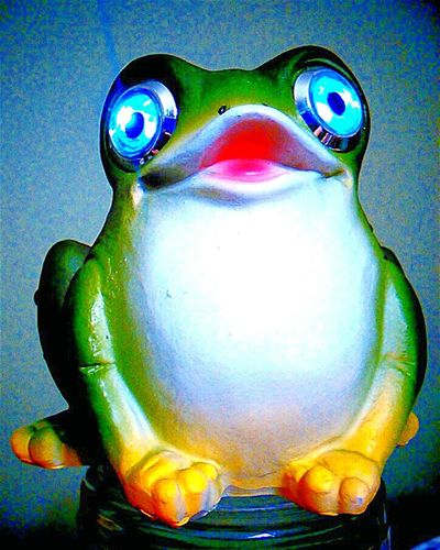 Frog Toad Froggy Froggie Bullfrog Cane Toad Toads And Frogs Frogs Flycatcher Rrribbit Ribbit Ribbitt Ribit Ribbitribbit