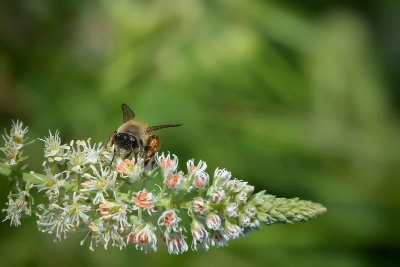 Animal Themes Animal Wildlife Animals In The Wild Beauty In Nature Bee Close-up Day Fragility Freshness Honey Bee Insect Nature One Animal Outdoors Plant Symbiotic Relationship Wildlife
