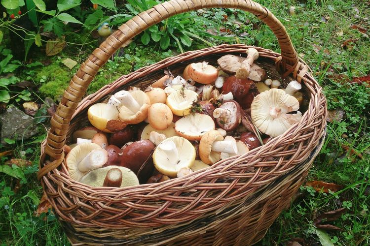 High angle view of mushrooms in basket