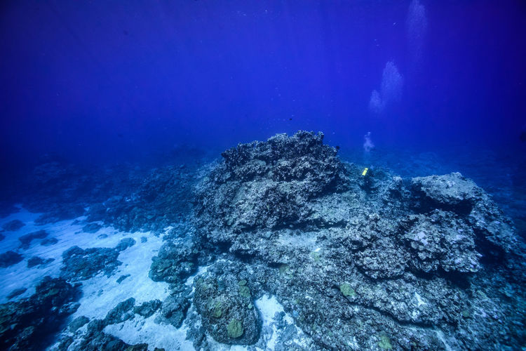View of coral swimming in sea