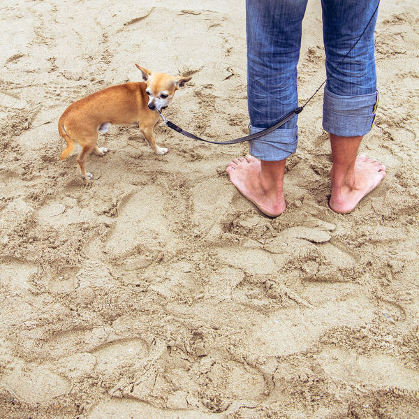 Adult Adults Only Bonding Chihuahua Day Dog Domestic Animals Friendship Human Body Part Low Section Mammal Men Nature One Animal One Man Only One Person Only Men Outdoors People Pets Real People Sand Standing Young Adult