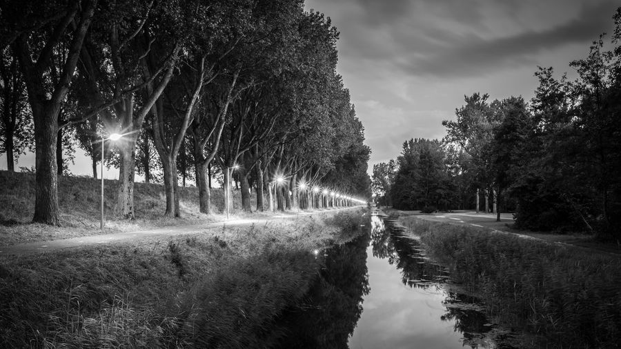 Trees along canal in the evening