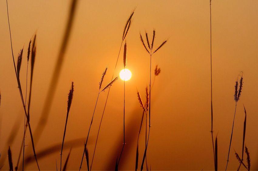 EyeEm Best Shots EyeEm Best Edits EyeEm Best Shots - Landscape Sunset #sun #clouds #skylovers #sky #nature #beautifulinnature #naturalbeauty #photography #landscape
