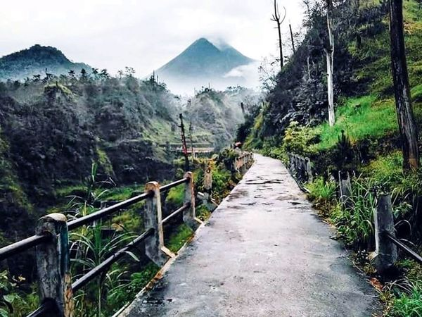 Nature Of indonesian EyeEmNewHere Cangkring Beautifullplace Selfiespot Tree Mountain Fog Sky Landscape Mountain Range Cloud - Sky Footbridge Covered Bridge Mountain Peak Railing Rocky Mountains Stairway Lush - Description Pine Tree Spiral Staircase