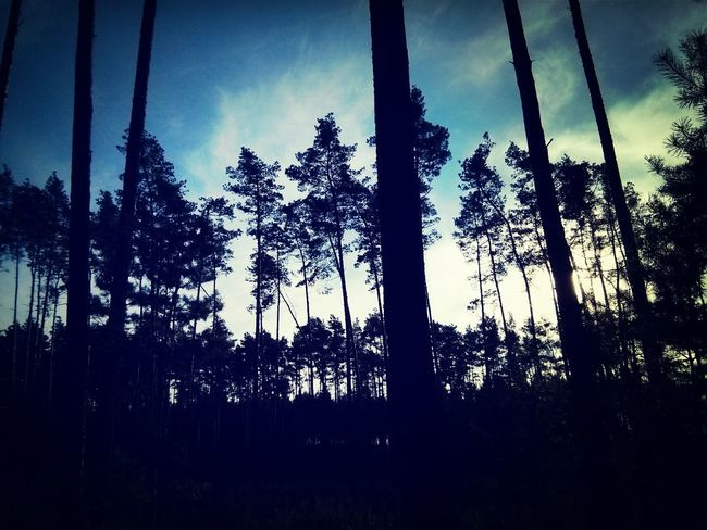 Trees in The Dark Forest