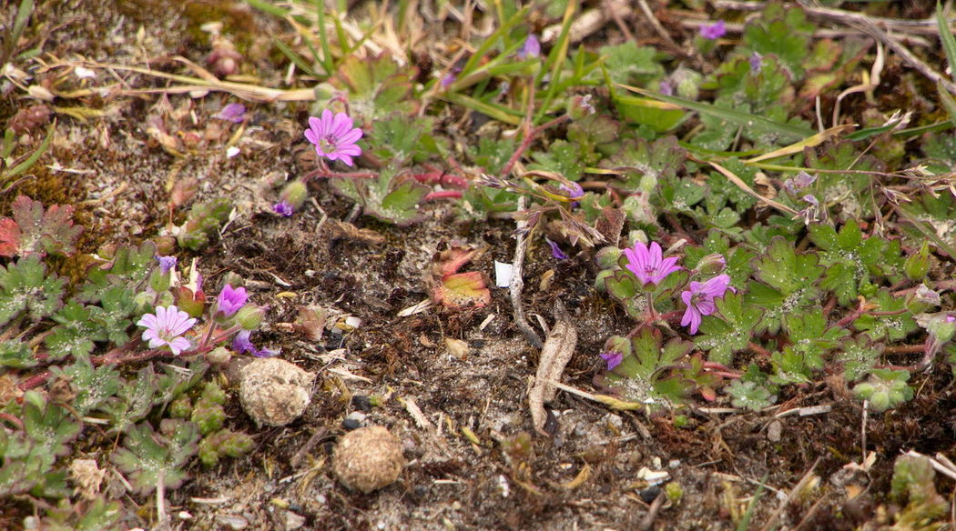 mini landscape with pink flowers and rabbit droppings Close Up Close-up Droppings Flower Mini Landscape Nature Nature Photography Pink Color Pink Flower Rabbit Dropping