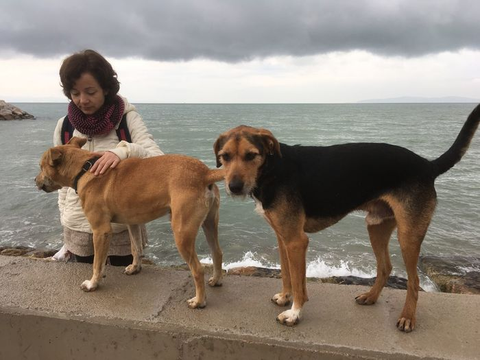 Dog EyeEm Selects Dog Canine Pets Domestic Domestic Animals Mammal Water One Animal Sea Beach Vertebrate Land Sky Nature Horizon Over Water Cloud - Sky People