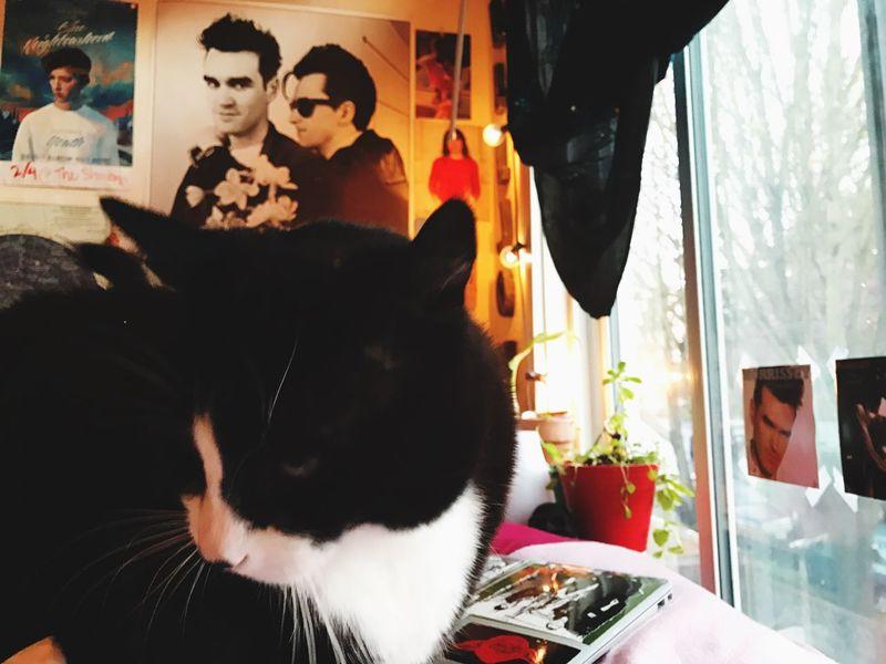 Emo Cat Pets Cat Morrissey Johnny Marr Emo Urban Seattle Bedroom First Eyeem Photo