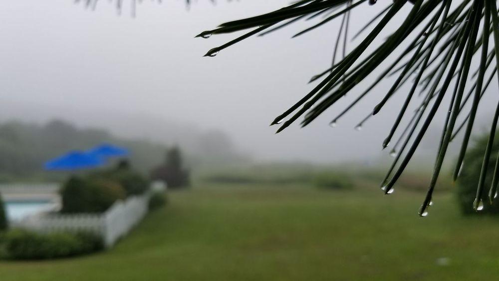 Misty morning. Tree Fog Wet Drop Weather Dew Foggy Mist Droplet