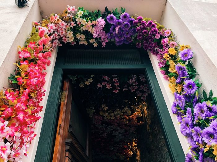 Door with flowers Flowering Plant Flower Plant Growth Vulnerability  Nature Fragility Freshness Beauty In Nature Architecture No People Potted Plant Petal Built Structure High Angle View Building Exterior Day Outdoors Springtime Window