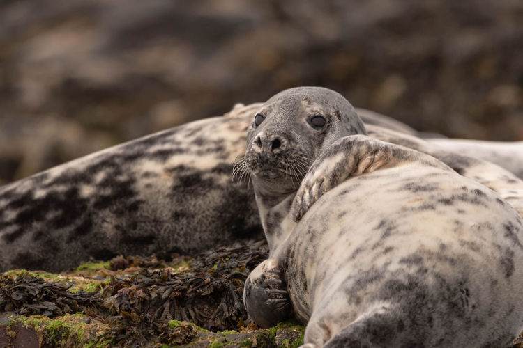 Close-up of a seals on rocks