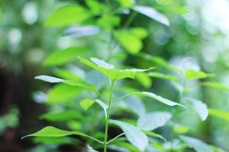 ธรรมชาติ First Eyeem Photo