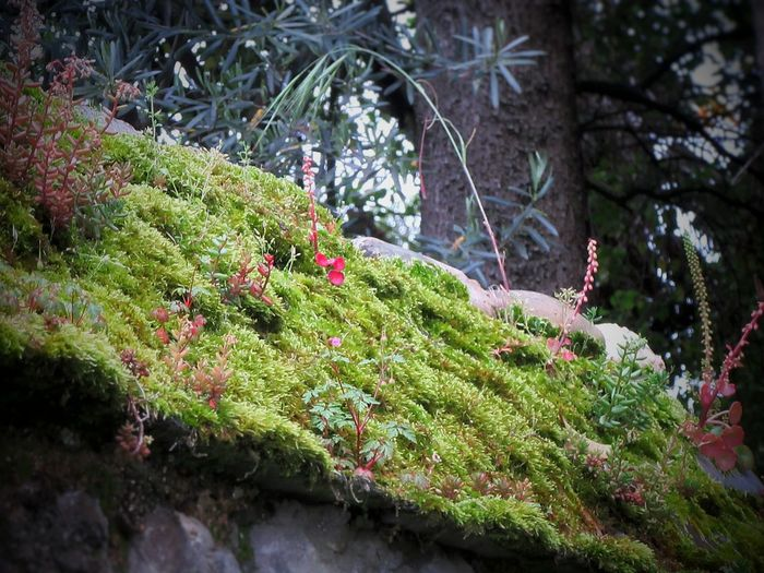 Close-up of moss growing on tree in forest