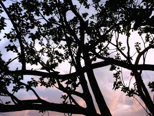 Rayure Tree Low Angle View Nature Branch Beauty In Nature Growth Silhouette Sky No People Outdoors Day Scenics Flower Freshness EyeEmNewHere Cloud - Sky Tranquility Backgrounds