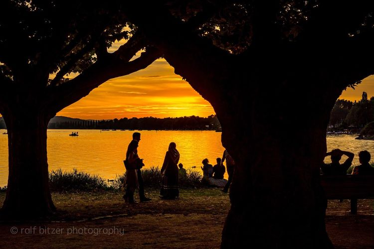 Radolfzell am Bodensee Sunset Tree Trunk Silhouette Tree Standing Nature Beauty In Nature Orange Color Growth Sky Outdoors Cloud - Sky Bodensee