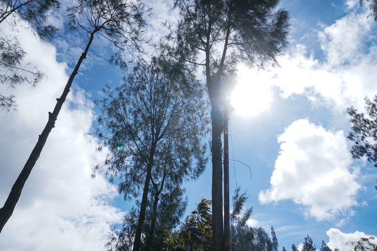 sky and sunlight, Mount Bromo. Tree Sky Plant Low Angle View Cloud - Sky Beauty In Nature Nature Day Tranquility Sunlight No People Scenics - Nature Tranquil Scene Growth Land Trunk Tree Trunk Outdoors Forest Non-urban Scene Directly Below Bromo Bromo-tengger-semeru National Park Bromo Mountain Forest Photography