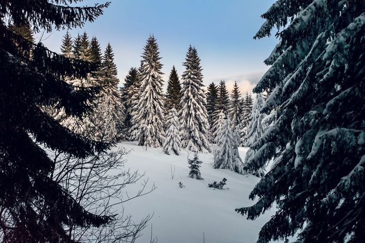 Trees ans Snow Winter Snow Cold Temperature Tree Nature Beauty In Nature Tranquility No People Pine Tree Outdoors Mountain Forest Landscape Scenics Sky Day