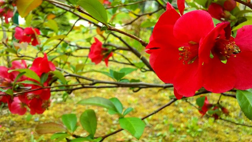 Red Nature Growth Beauty In Nature Tree Flower Outdoors Day Plant No People Fragility Branch Close-up Flower Head Petal
