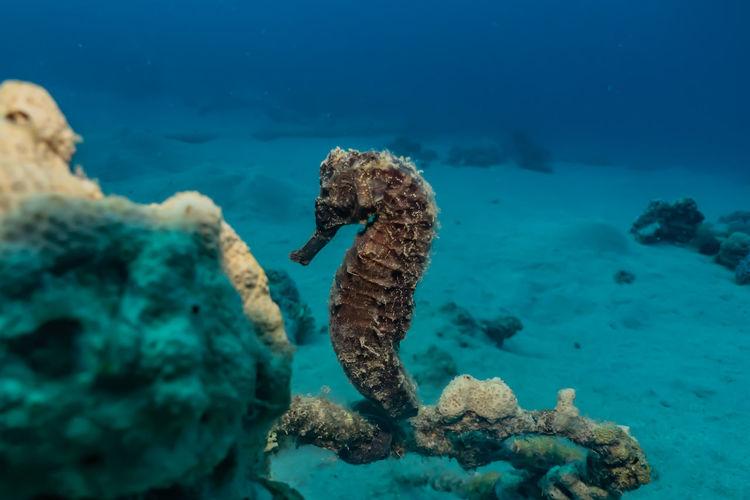 Sea horse in
