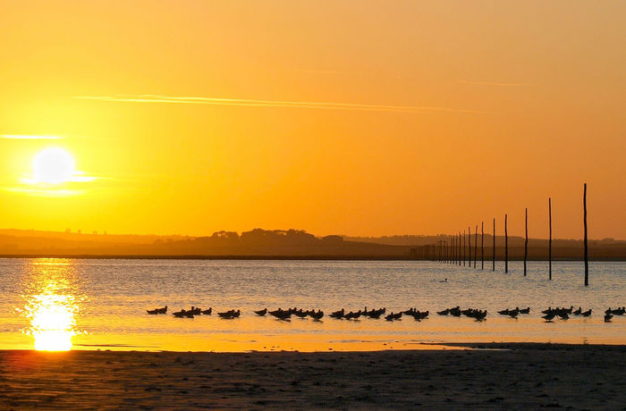 Sunset over Lindisfarne Beach Beauty In Nature Birds Day Horizon Over Water Lindisfarne Nature Outdoors Reflection Scenics Sea Sky Sun Sunset Tranquil Scene Tranquility Waders Water Paint The Town Yellow