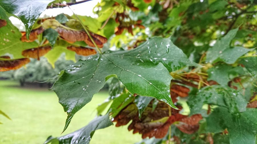 autumn Rainy
