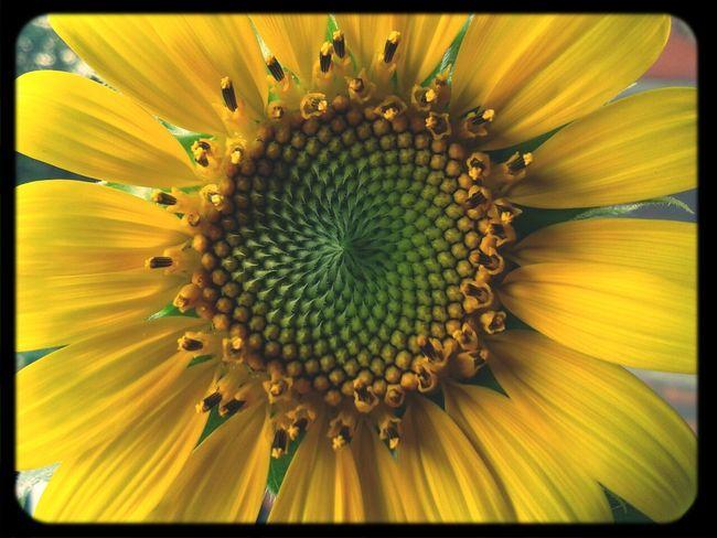 Flowerporn Flower