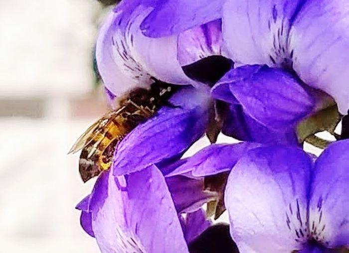 Busy Bee Bee