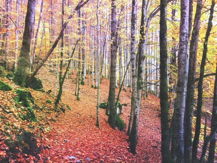 Lost in forest Forest Trees Mexturesapp EyeEmSwiss Landscape_photography EyeEm Nature Lover Instameet Streamzoofamily
