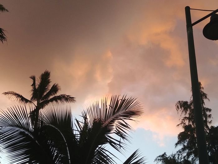 Faces Beautiful Nature Thank You Cloud Speak Blessed  Do You See What I See? WOW Divinity Of Nature Look Up No Filter Cloud Art Communication Sky Palm Tree Tropical Climate Plant Tree Low Angle View Nature Cloud - Sky Tranquil Scene Tranquility No People
