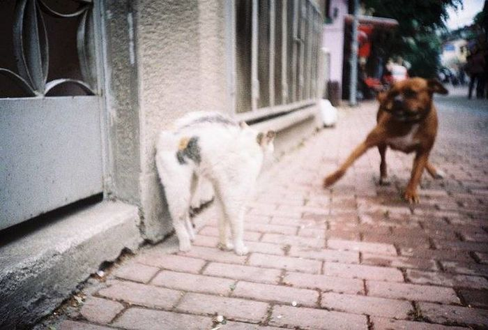 This photo is taken by me, 7 years ago with the best camera i had, Lomo LC-A Lomo Lomography Analogue Photography No Edit/no Filter Glitch Blur Animal Dog And Cat Fight Streetphotography Street Animals Petportrait Pet Portraits Photo Journalism Turkey Bursa Dogs Learn And Shoot: Balancing Elements Film Showcase March Throwback Street Life Photography In Motion The Street Photographer - 2016 EyeEm Awards