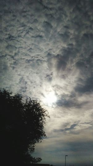 Good morning Earth! Sunrise New Day Rising Good Morning! Walking Boots N Jeans Gal💝 Just Be Me 💎💙💎 Hello World Oklahoma Happy EyeEm Best Shots Eye4photography  EyeEmNewHere Ray Of Sunshine EyeEm Good Morning Tree Sky Cloud - Sky