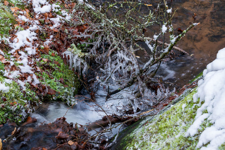 High angle view of stream amidst trees in forest during winter