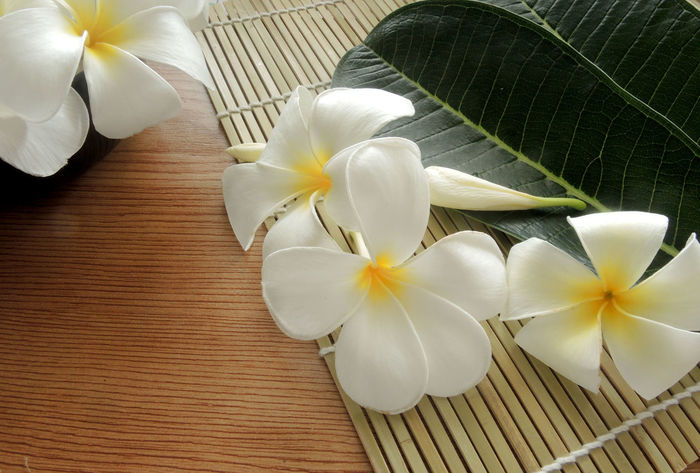Plumeria flowers with green leaf. Aromatherapy Plumeria Wellness Aroma Beauty In Nature Flower Flower Head Flowering Plant Fragility Freshness Growth Inflorescence Leaf Massage Nature Petal Place Mat Plant Plumeria Flowers Resort Spa Vulnerability  White Color