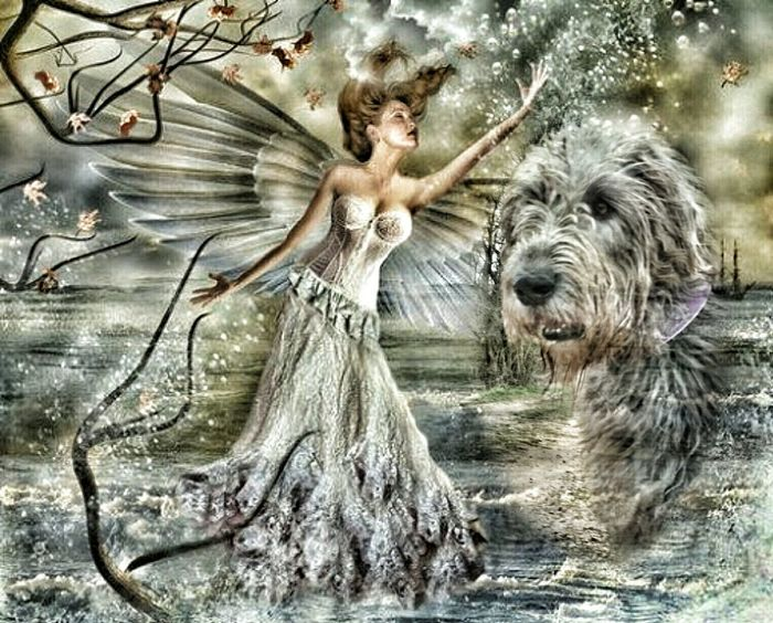 Check This Out Fantasy Dreaming Fantasy Irish Wolfhound Fantasy Photography Fairy Fairy Garden Fairy World