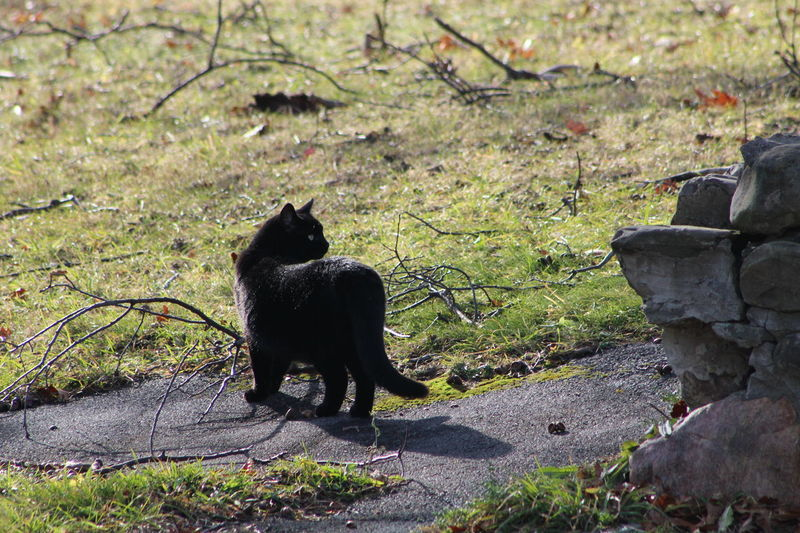 Kitty enjoying nice weather in WNY Dec. 2015 Alertness Animal Animal Themes Black Black Cat Black Color Curiosity Day Domestic Animals No People One Animal Rockwall Side View
