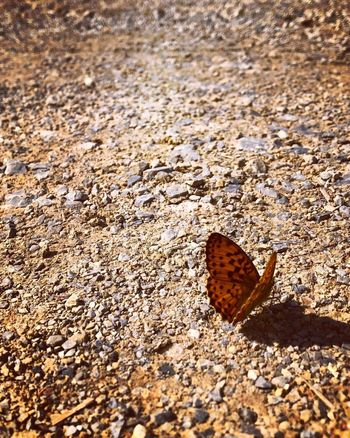 Calm Beautiful Butterfly Nature Day Shadow Beauty In Nature Solid The Great Outdoors - 2018 EyeEm Awards The Traveler - 2018 EyeEm Awards The Creative - 2018 EyeEm Awards
