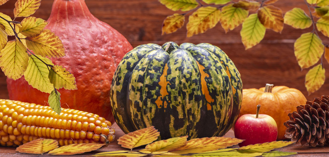 thanksgiving day with pumpkin fruit and leaves Autumn Collection Autumn colors Copy Space Fashion Agriculture Autumn Close-up Day Decoration Fall Food Food And Drink Freshness Fruit Gourd Harvest Healthy Eating Nature No People Pumpkin Raw Food Still Life Thanksgiving Vegetable Wellbeing