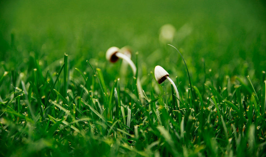 Wild Mushrooms And Grass Growing On Field