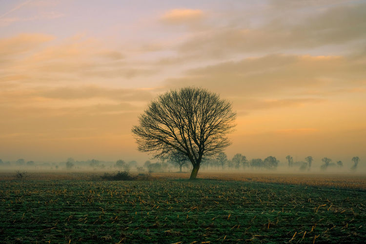 Lonely bare tree in a countryside morning landscape Bare Tree Beauty In Nature Cloud - Sky Environment Field Fog Isolated Land Landscape Nature No People Non-urban Scene Outdoors Plant Scenics - Nature Sky Solitude Sunset Tranquil Scene Tranquility Tree