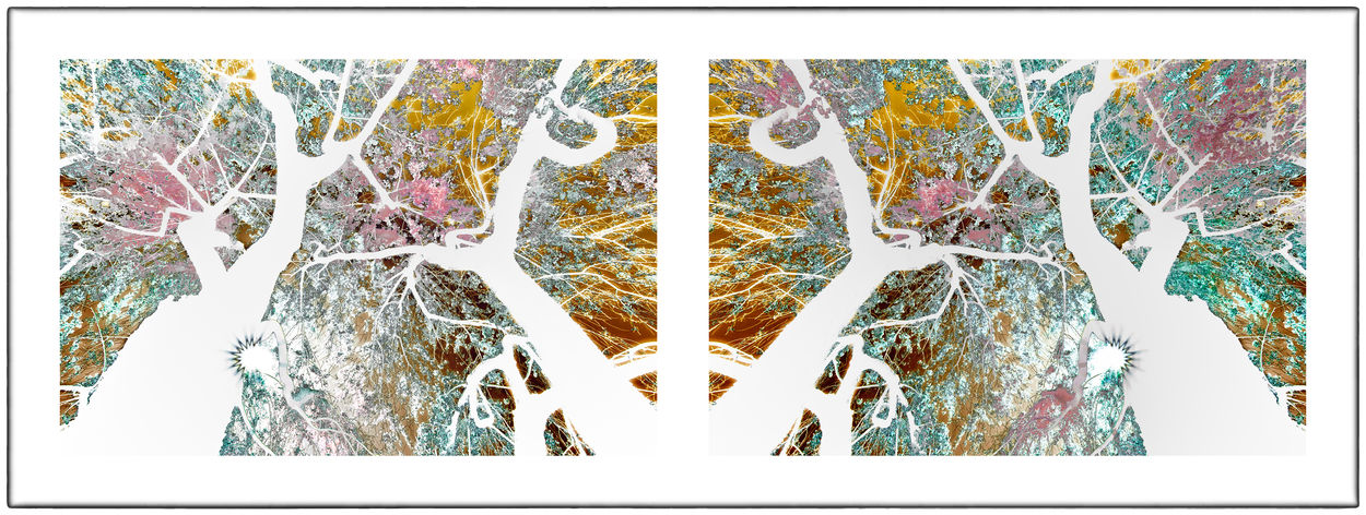 Cherry Blossoms Cherry Tree Diptych Flowers Diptychs Flower Flowers Pairs Solarization Solarized Flowers