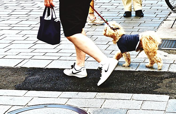 Q Tokyo Street Photography Enjoing Life Cute♡ EyeEm Best Shots Enjoying With Friends  EyeEm Best Edits Enjoying Life Cuteness Street Fashion Street Photography Nightphotography DogLove Dogsarefamily Cute Pets Cute Dog  Dogs Of EyeEm
