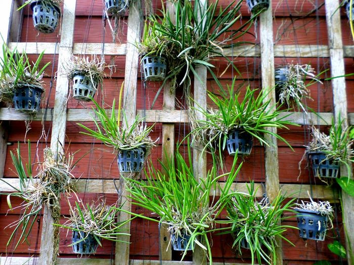 Potted plants against building