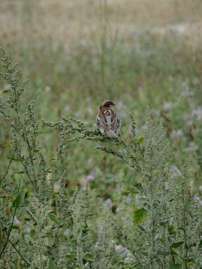 Butterfly on a field