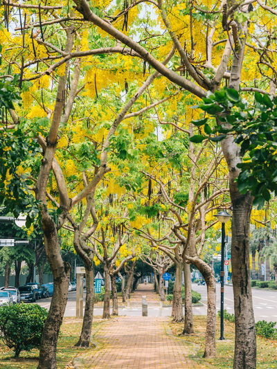 Tree Branch Tree Trunk