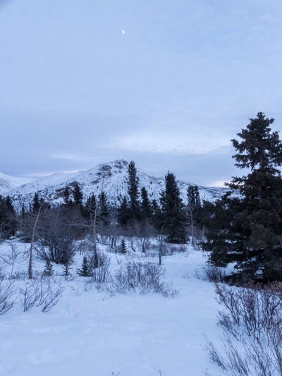 snowcapped ground, mountain and sky Beauty In Nature Blue Hour Canada Cold Temperature Landscape Landscape_Collection Landscape_photography Moon Mountain Nature No People Outdoors Scenics Sky Snow Tranquil Scene Tranquility Tree Winter Yukon Territory