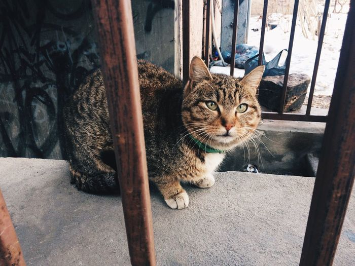 Domestic Cat Domestic Animals Pets Looking At Camera Animal Themes Mammal Feline Portrait Cat One Animal Day No People Indoors  Cats Street Streetphotography Urban EyeEmNewHere Russia Adapted To The City