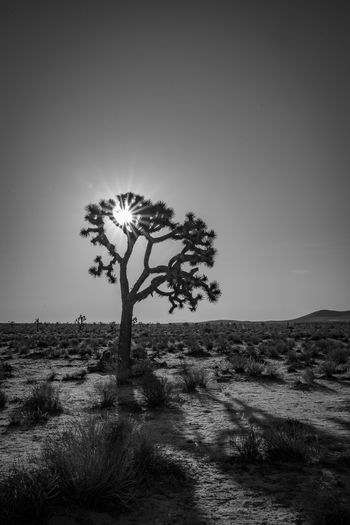 Cloudscape landscape nature dunes Oregon California Arid Climate Beauty In Nature Black And White Clear Sky Day Environment Field Grass Growth Horizon Joshua Tree Land Landscape Nature No People Non-urban Scene Outdoors Plant Scenics - Nature Single Tree Sky Tranquil Scene Tranquility Tree