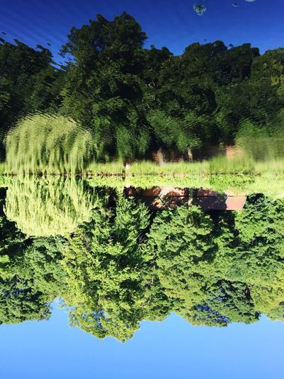 Tree Reflection Growth Water Nature Lake Beauty In Nature Outdoors Scenics Plant Tranquil Scene Day No People Clear Sky Tranquility Green Color Sky Landscape